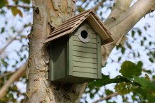 green-nestbox-on-birch